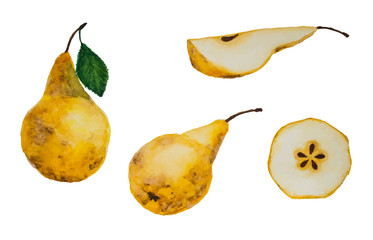 vector set of watercolor hand drawing yellow ripe pears and slices