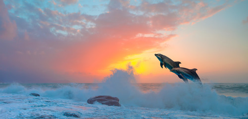 Couple of dolphins jumping on the water at sunset - Beautiful seascape and blue sky