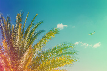 Green branches of a palm tree on a background blue sky with clouds