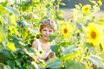 Adorable little blond kid boy on summer sunflower field outdoors. Cute preschool child having fun on warm summer evening at sunset. Kids and nature