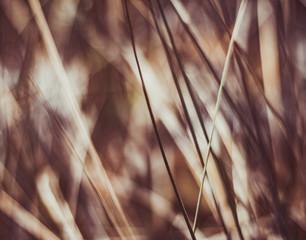 Rustic summer field