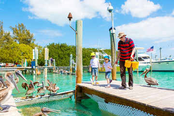 Young father and two little kid boys feeding fishes and big brown pelicans in port of Islamorada, Florida Keys. Man and his sons, preschool children having fun with observing animals