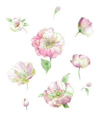 Colorful flower on white background,Big Set watercolor elements