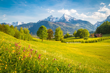 Photo sur Plexiglas Bleu ciel Idyllic mountain scenery in the Alps with blooming meadows in springtime