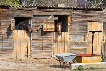 Fototapeta Dos caballos asoman las cabezas por las ventanas de una cuadra de madera obraz