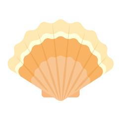sea shell flat illustration