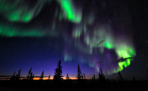 Aurora Borealis above northern forest with many stars in the dark sky