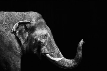 Portrait of an elephant on a black background. Isolated Wall mural