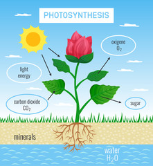 Photosynthesis Educational Poster