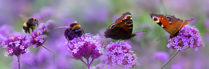 bumblebees and butterflies on the garden flower - macro photo