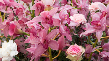 Beautiful wallpaper with plenty of pink orchids