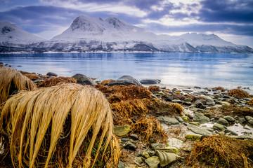 Piękna kamienista plaża w zimowej Nrorwegii