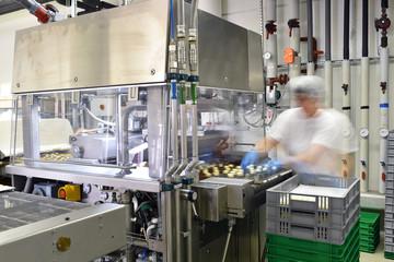 Arbeiterin am Fliessband in der Lebensmittelindustrie - Produktion von Pralinen in einem Werk // Worker on an assembly line in the food industry - Production of pralines in a factory