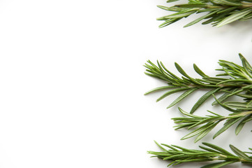 Rosemary twig fresh green. Natural spice.