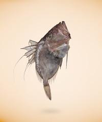 Zeus Faber (John Dory) fish, isolated on beige background