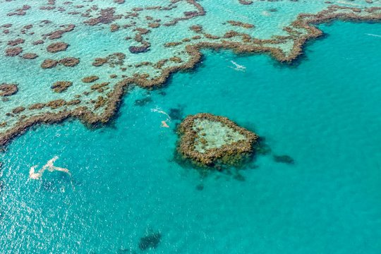 Coral Reef, Heart Reef, part of Hardy Reef, Outer Great Barrier Reef, Queensland, Australia, Oceania