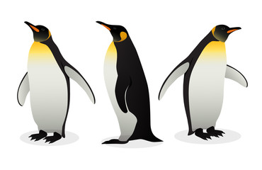 Flock Of Emperor Penguins on white background