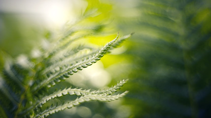 Blurred background with bokeh with fern leaves