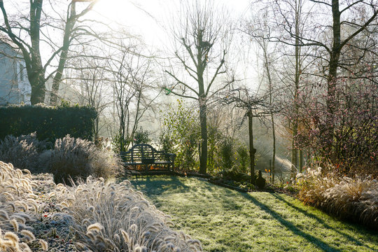 Winter at the pond in natural beautiful garden. A landscape view on a summer morning in frost & sunlight of a garden, plant borders, green frosty grass lawn brown.