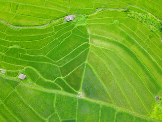 Aerial view of thailand rice field, drone shot