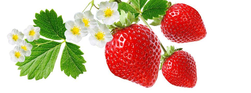 gardening red healthy strawberry