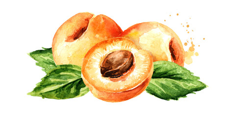 Ripe apricot horizontal composition. Watercolor hand drawn illustration, isolated on white background