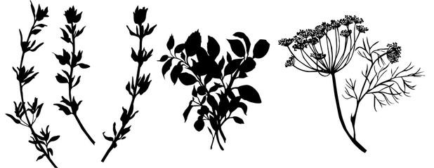 Fototapeta Flavouring herbs. Black and white illustration obraz