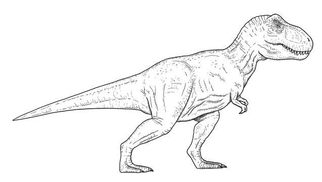 Drawing of dinosaur - hand sketch of tyrannosaurus rex, black and white illustration