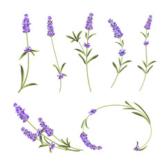 Provence flowers collection. Set of lavender flowers elements. Violet flowers kit. Fashion summer print bundle. Elements for invitation card and your template design. Vector illustration.