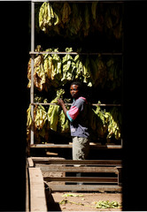 A man stands beside drying tobacco at a processing plant outside Harare