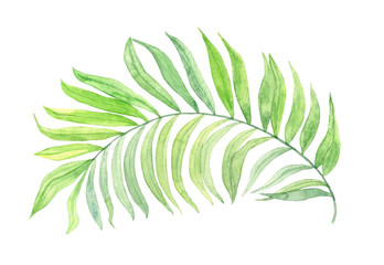 Tropical leaf. Watercolor illustration.