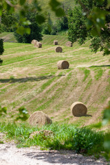 some straw bales on a field in Marche Italy