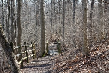 The wood bridge in the forest on the hiking trail.