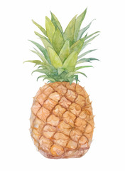 Watercolor illustration pineapple.