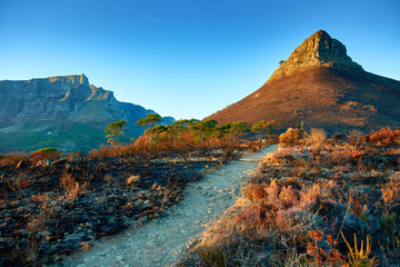 Lions Head, Cape town, after bush fire
