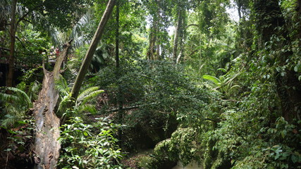Forêt tropical d'indonésie