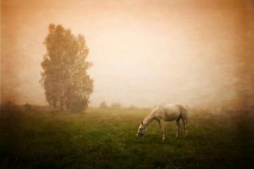 Fototapeta wolny koń na łące