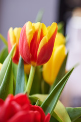 Spring bouquet of colorful tulips.