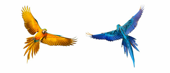 Printed roller blinds Bird Colorful flying parrot isolated on white background.