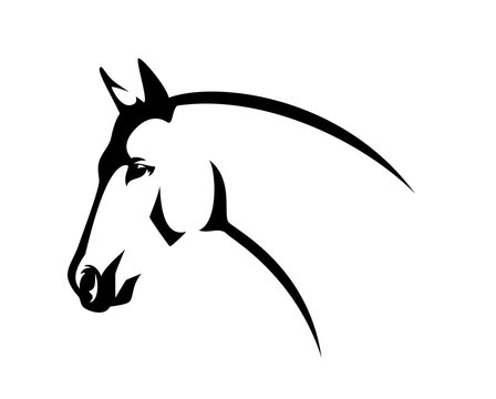 horse head side view - elegant thoroughbred stallion black and white vector profile portrait