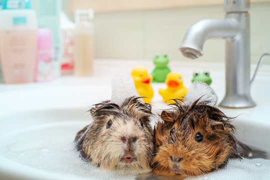 They love to swim together. Couple of funny animals шт еру bathroom