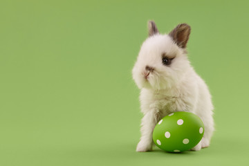 White baby bunny rabbit with green painted polka-dotted egg on green background. Easter holiday concept.