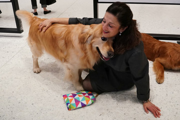 An owner hugs her Golden Retriever at the American Kennel Club's Museum of the Dog during an unveiling of the clubs most popular breeds in New York