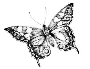 Butterfly Drawing, Butterfly Pen and Ink Illustration, Drawing of Monarch, Stipple Art, Butterfly Artwork