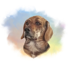 Cute dog on watercolor background. Portrait of a Handsome Hunting Dog. Hand painted illustration. Animal collection: Dogs. Good for print T-shirt, pillow, pet shop. Art background. Design template