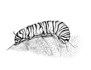 Caterpillar Drawing, Pen and ink Illustration, Caterpillar Art, Hand Drawn Artwork, Caterpillar on Leaf