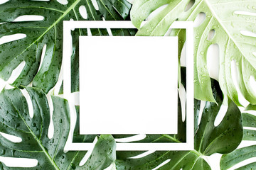 Wall Mural - Texture tropical palm green leaf Monstera with dew drops and white frame with copy space for text on white background. Flat lay, top view