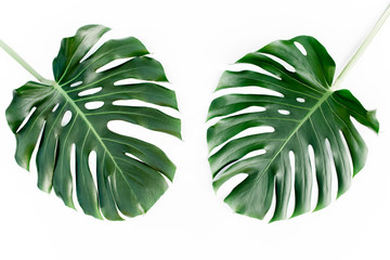 Tropical green leaves Monstera on white background. Flat lay, top view