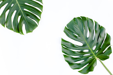 Wall Mural - Tropical green leaves Monstera on white background. Flat lay, top view