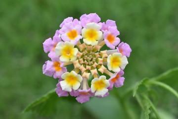 Flower,nature,plant,flor,naturaleza,spring,primavera,pink,rosa,yellow,amarillo,blanco,white